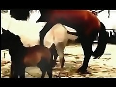 sex hors animal   hd